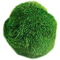 UEETEK Cladophora Aegagropila Moss Ball Plantas acuáticas para pecera o acuario