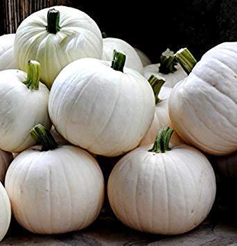 Potseed Cotton Candy Kürbis 10 Seeds - Neue (Der Ist Halloween-kürbis Essbar)