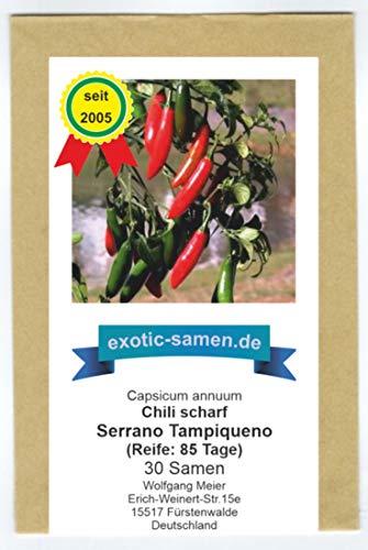 Das beliebteste Serrano-Chili in Mexiko - Serrano Tampiqueno - 30 Samen (Serrano-samen)