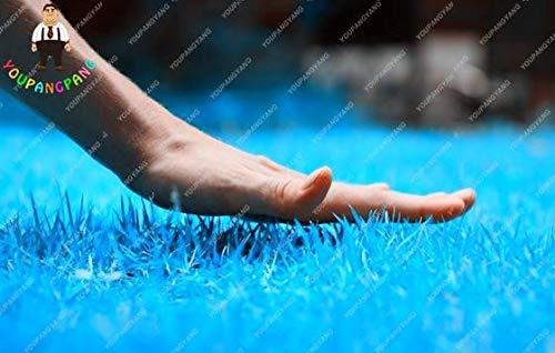 Go Garden À haute teneur RainBow gazon, Golf Maison de catégorie spéciale pelouse = terrains de football, Villa, Fleurs plantes Jardin des plantes 200 pièces: 10