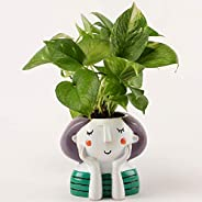 Ferns N Petals Green Money Plant in Thinking Girl Pot | Indoor Plant | Air Purifying Plant