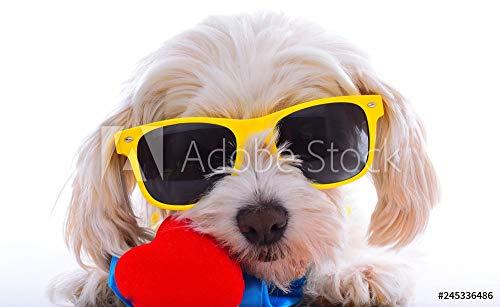 otiv: Party Dog with Heart #245336486 - Bild auf Forex-Platte - 3:2-60 x 40 cm / 40 x 60 cm ()