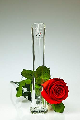 Rosen-te-amo Echte Blume (55 cm groß) im 'Sandra Rich Glas Vase, herunterladbare Grußkarte -...