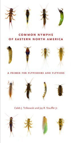 Common Nymphs of Eastern North America: A Primer for Flyfishers and Flytiers (A Keystone Book ?) Spi edition by Tzilkowski, Caleb J., Stauffer Jr., Jay R. (2011) Spiral-bound
