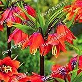 Pinkdose 1 borsa = 100 pezzi Corona Imperial bonsai pianta 5 colori Fritillaria Imperialis Premier Facile da coltivare Casa Giardino Copertura del suolo Pianta: 1