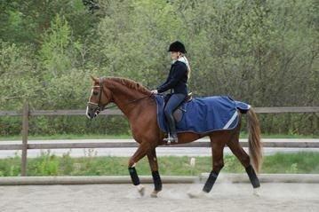 Bucas Riding Rug Ausreitdecke wasserdicht blau-gold Vormodell 135