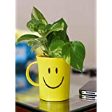 Rolling Nature Good Luck Money Plant in Smiley Cup