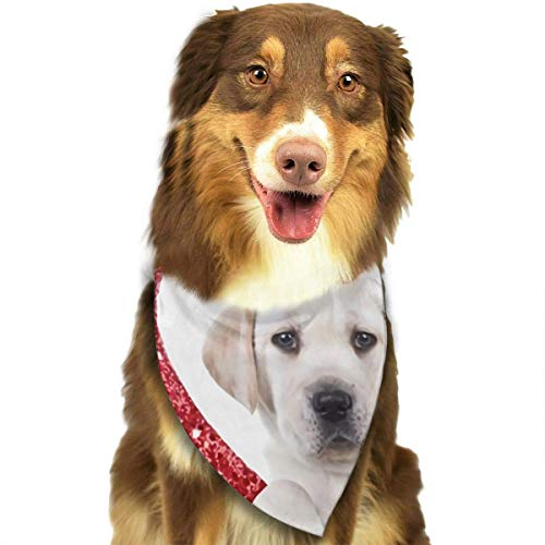 Osmykqe Hund Bandana Kiss Me Ich Bin Irish St Patrick's Day Hundelätzchen Trangle Kopftuch für Katzen Pupply Big Dog Soft (Dog Name Tag-camo)