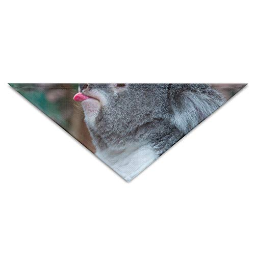 Gxdchfj Funny Koala Bear Showing His Tongue Turban Triangle Scarf Bib Scarf Accessories Pet Cat and Baby Puppy Saliva Dog Towel