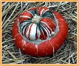 Bobby-Seeds Kürbissamen Bischofsmütze - Red Turban Portion