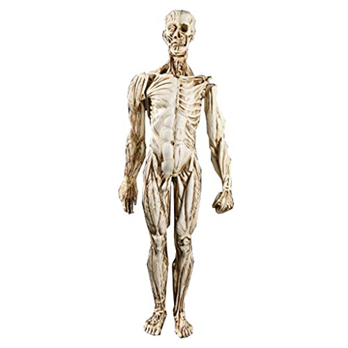Menschliches Skelett anatomische Modell männlich 1:1 Leben Größe Anatomie Figur Schädel Skulptur Körper Muskel medizinische Harz Handwerk Lehre