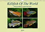 Killifish Of The World (Wall Calendar 2019 DIN A4 Landscape): Colourful fish - Killifish from Africa and America (Monthly calendar, 14 pages ) (Calvendo Nature)
