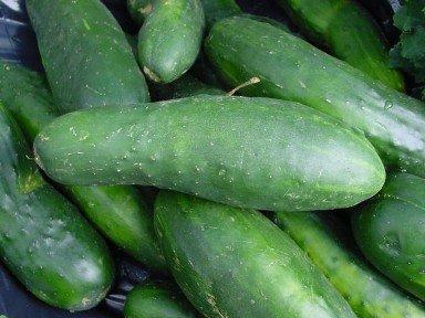 HÉRITAGE concombre 25 graines NON OGM Ashley