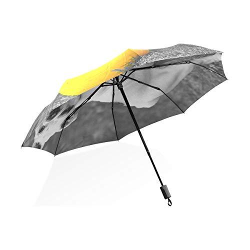 ISAOA Paraguas de Viaje automático Compacto Plegable Paraguas Blanco Bulldog Play fútbol Resistente al Viento Ultra Ligero UV protección Paraguas para Mujeres Hombres
