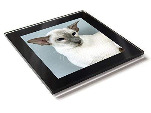 Siam Karamell Point-Katze Kätzchen Premium Glastisch Untersetzer mit Geschenkverpackung -