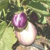 SeeKay Aubergine Rosa Bianca - 25 seeds 'Egg Plant' - Vegetable