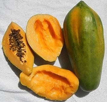 Homely Papaye rouge (Carica papaya) Mu Gua Dawf Pawpaw Tropical Fruit Tree 10 + Graines