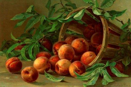 Pfirsiche in einem Korb - Früchte Stilleben -- gerahmte Miniatur / Reproduktion einer Chromolithografie um 1890 - Format 10 x 15 cm, hinter Glas im Echtholzrahmen (Pfirsich Aquarell)