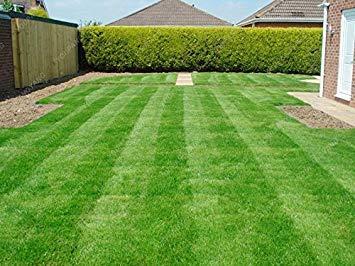 200 Pcs / Sac gazon Graines de golf de catégorie spéciale Evergreen gazon Graines Terrains de soccer Villa High Grade Fleurs Graines Jardin des plantes