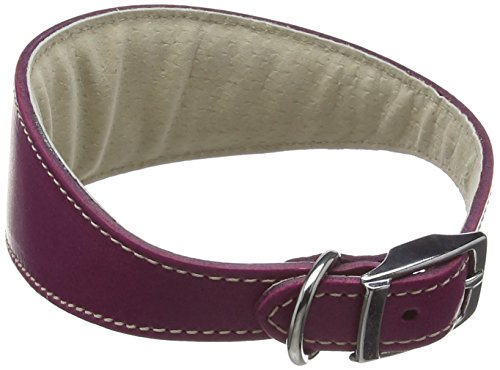 bbd-pet-products-whippet-deluxe-collar-boysenberry