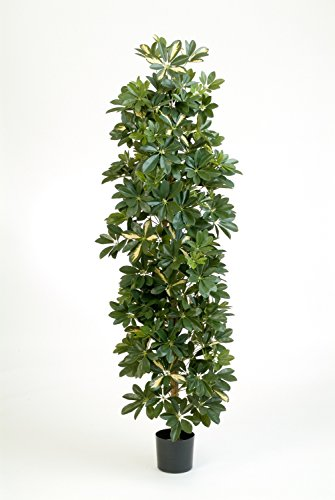artplants – Künstliche Schefflera Säule Andrew am Stamm, getopft, grün – weiß, 180 cm – Deko Grünpflanze/Unechte Pflanze