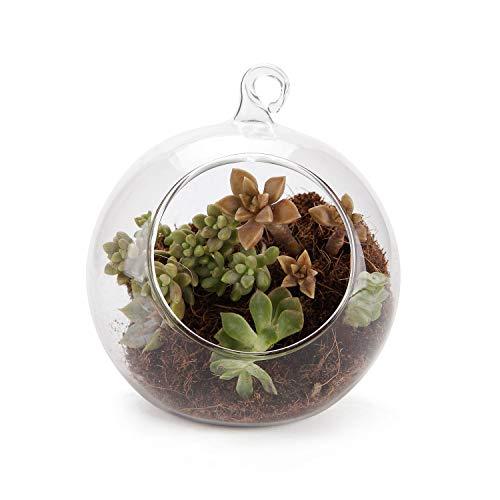 T4U Rachel's Φ15CM Glaskugel Sukkulenten Pflanzen Kugel Teelichthalter Kerzhalter für Hängedeko Hochzeitdeko