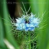 AGROBITS Blume Bonsais Vier Jahreszeiten Gras Bonsai -Zimmer Balkone und