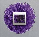Dekorativer Aufkleber für Lichtschalter Kornblume - Größe 20 x 20 cm