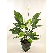 Plantas artificiales decorativas for Plantas decorativas amazon