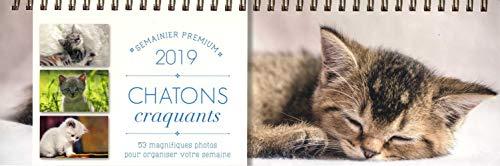 Semainier premium Chatons craquants 2019 par Collectif