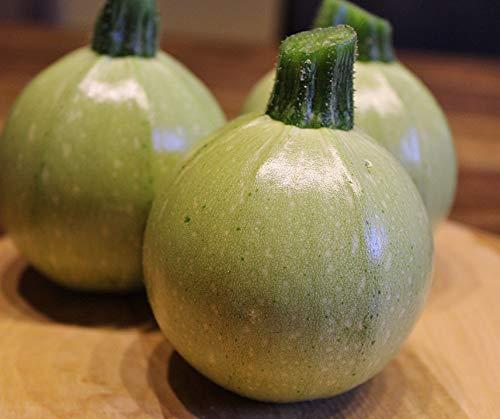 Zucchini Ball' F1,