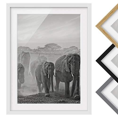 Bilderwelten Póster Enmarcado - Herd of Elephants - Color de Marco Blanco...