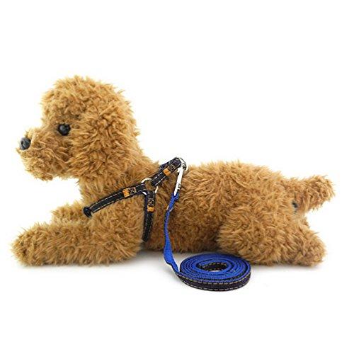 Gangster-hexe (smalllee _ Lucky _ store Pet Cat Heavy Duty Denim Dog Leine Doggy Leine Geschirr verstellbar strapazierfähige Leine Set für Training)