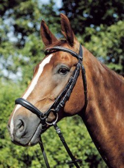 USG Bridle Quantus with Drop Noseband/ Self Lined/ Silver Fittings/ Web Reins, Cob, Black Leather 1
