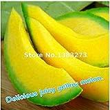 Vistaric 20pcs Super Big Sweet Honey-dew Melón Semillas Hami Melón Fruta Semillas Reliquia Plantas Suculentas Cantalupo Sementas Para Jardín Verde