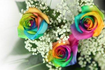 3 bunte Rosen - dekoriert und inklusive gratis Kultvase von Blumenversand Rosenbote bei Du und dein Garten