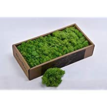 YATAI Natural Preserved Fresh Moss Grass For Plants Flowers Background Wall Decoration Crafts Project And Special Events Use (Green)