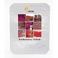 Herencia de EE.UU. Boston roja de la hiedra Semillas de plantas Escalada, Paquete Profesional, 10 semillas / Paquete, hermosa enredadera de Virginia E3431