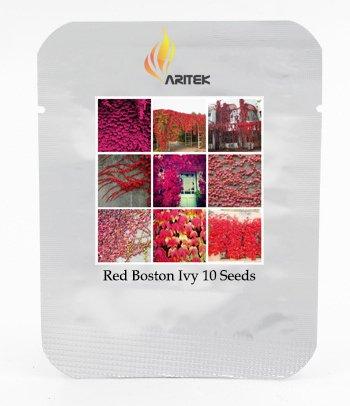 Heirloom USA rot Boston Ivy Klettern Plant Seeds, Profi-Pack, 10Samen/Pack, Beautiful Virginia Creeper E3431 (Rot 3 Stück, Creeper)