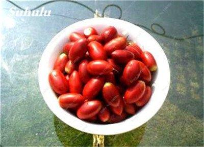 Chine bon marché 5 Pcs Miracle Fruit Graines Cashew Arbre Anacardium Tropical New Pot Occidentale Plantation Gardens Livraison gratuite 15