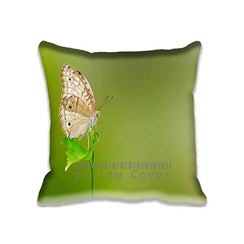 Deglogse Cushion Covers, Throw Pillow case, Butterfly Green Background Chair Seat Back Office Cushion Cover Polyester Throw Pillow Case Decorative Pillowcase Square Pillow Sham