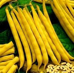 50-cherokee-yellow-wax-bean-bush-bean-phaseolus-vulgaris-vegetable-seeds-by-seedville
