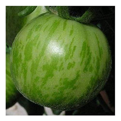 Hell- / dunkelgrün gestreifte Tomate - Green Zebra - 20 Samen