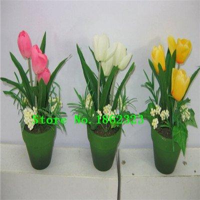 Graines Nouveau Arrivée 12 Couleur 200 mix tulipe odorante Graines vivace Fleur pour Jardin en Bonsai