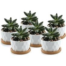 vasi piccoli per piante grasse
