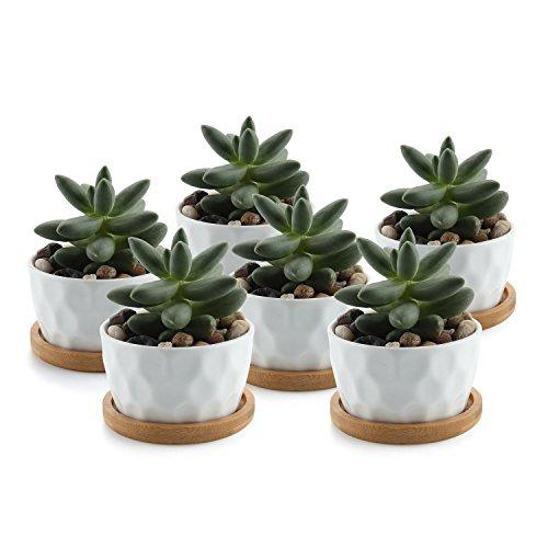 T4U 8CM Keramik Weiß Tüpfelchen Design Sukkulenten Töpfe Kaktus Pflanze Töpfe Mini Blumentöpfe mit Bambus-Untersetzer, 6er Set Keramik-8