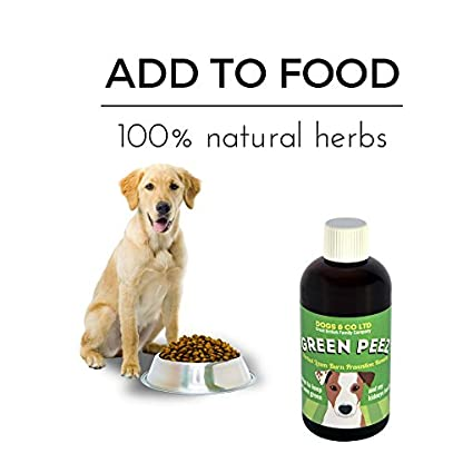 Green Peez dog urine grass patch repair neutralises burn marks on lawn 5