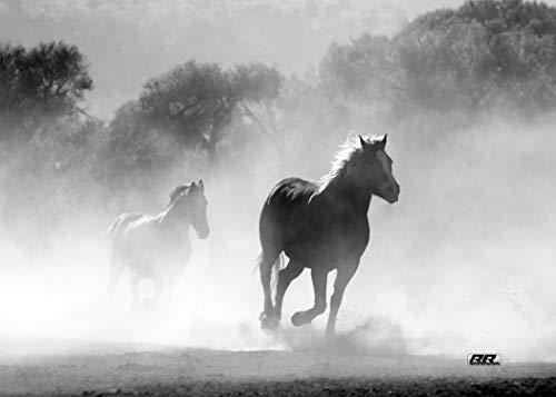 Wild Horse Mustang (Rogue River Taktische Leinwanddruck, Motiv Wild Mustang Horses Running Horses, 51 x 41 cm, Schwarz/Weiß)