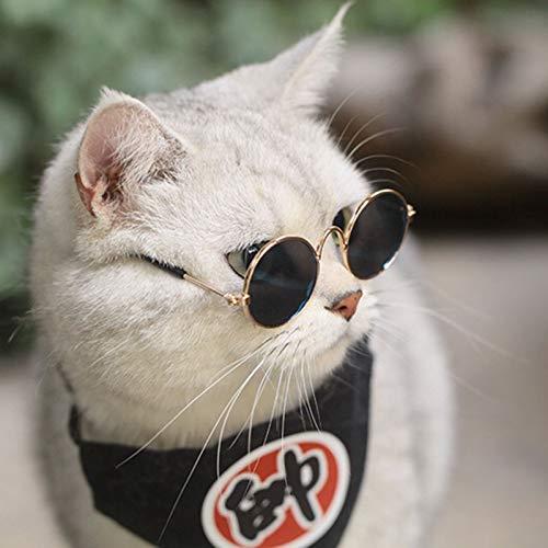 LXLLXL Haustierbrille, Retro-Stil, Persönlichkeit, Katze, Sonnenbrille, lustige Foto-Requisiten, englische Kurzverkäufe, Meng Tide Zubehör