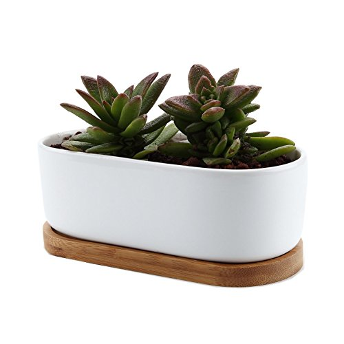 t4u-17cm-ceramic-white-modern-oval-design-sucuulent-plant-pot-cactus-plant-pot-with-bamboo-tray